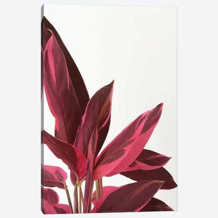 Red Leaves II Canvas Print #CSB107} by Cassia Beck Canvas Wall Art