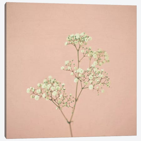 Baby's Breath Canvas Print #CSB10} by Cassia Beck Canvas Art Print