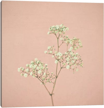 Baby's Breath Canvas Art Print