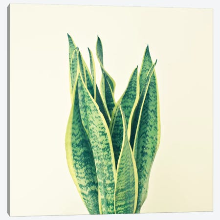 Snake Plant Canvas Print #CSB116} by Cassia Beck Canvas Art Print