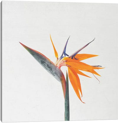 Bird of Paradise Canvas Art Print