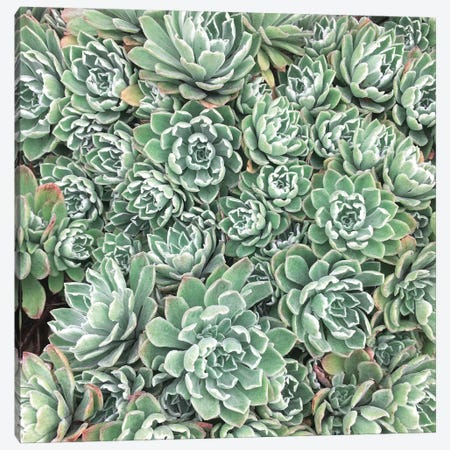Succulent Bed Canvas Print #CSB124} by Cassia Beck Canvas Wall Art