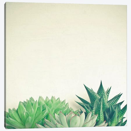 Succulent Forest Canvas Print #CSB127} by Cassia Beck Canvas Art