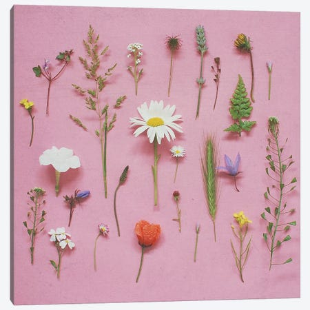 Wild Flowers Canvas Print #CSB150} by Cassia Beck Canvas Artwork