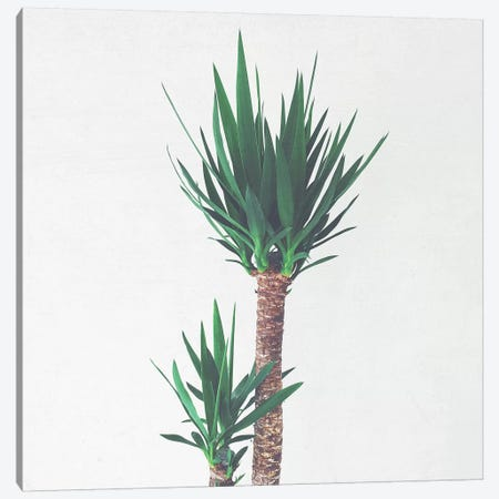 Yucca II Canvas Print #CSB153} by Cassia Beck Canvas Artwork