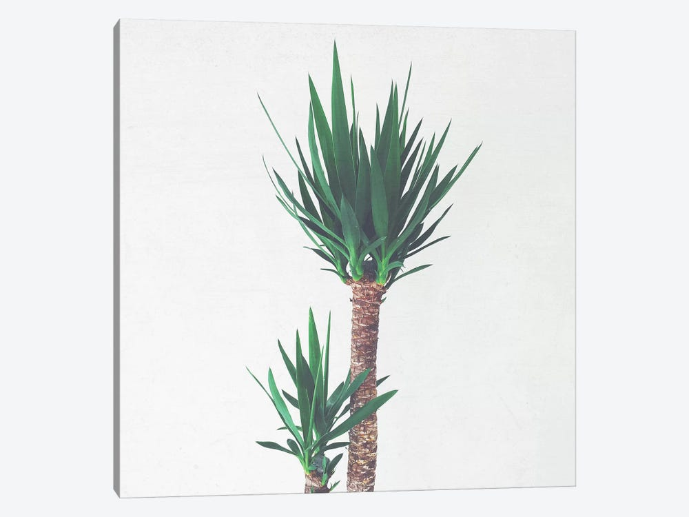 Yucca II by Cassia Beck 1-piece Canvas Art