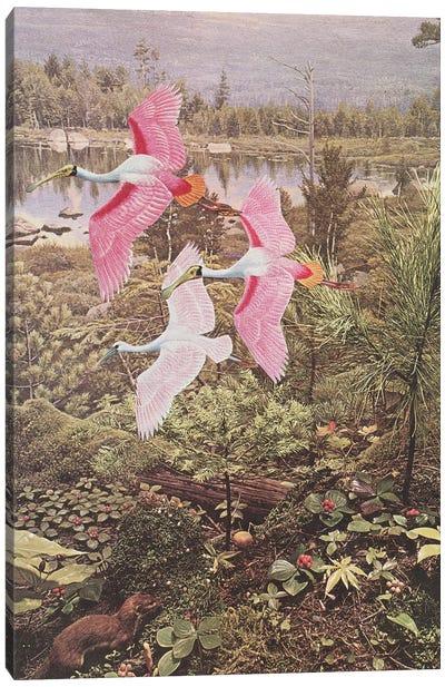 Flight of the Spoonbills Canvas Art Print