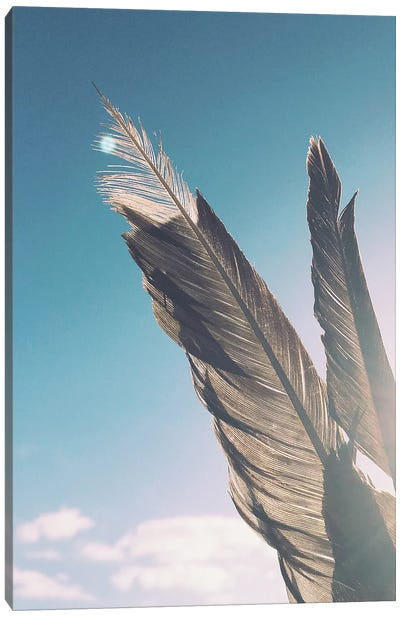 Brown Feathers Canvas Art Print