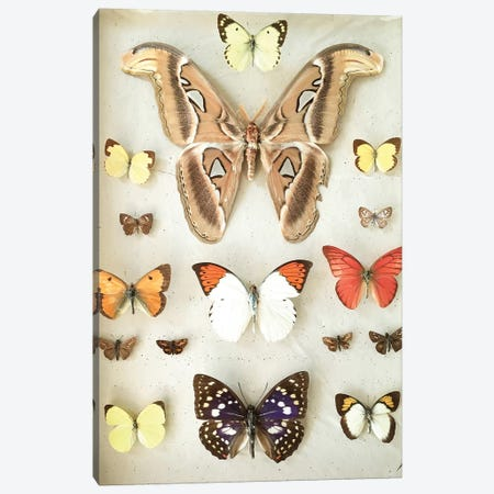 Butterflies and Moths Canvas Print #CSB20} by Cassia Beck Canvas Art
