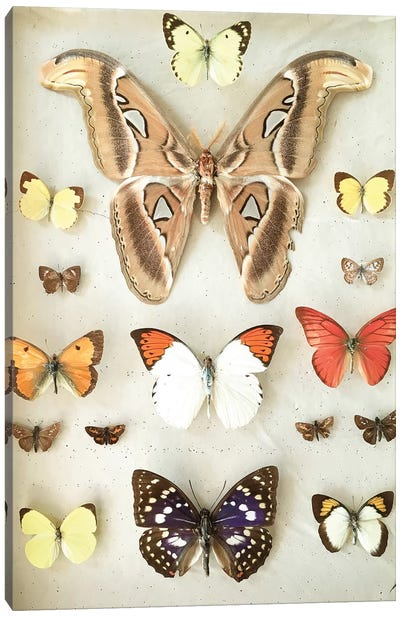 Butterflies and Moths Canvas Art Print