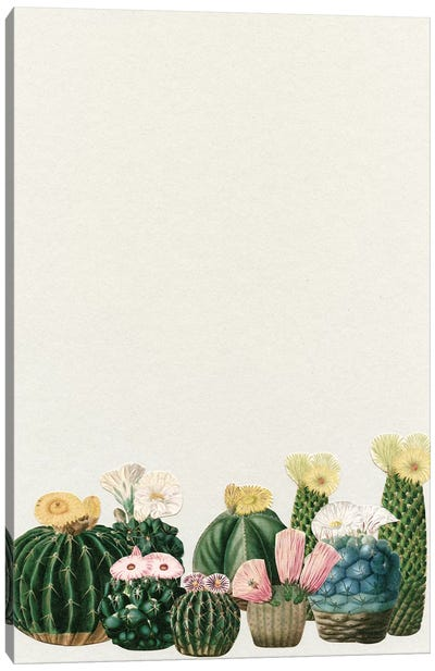 Cactus Garden (Collage) Canvas Art Print
