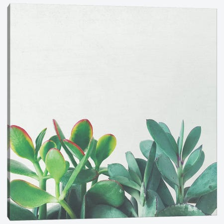 Crassula Group Canvas Print #CSB34} by Cassia Beck Canvas Art