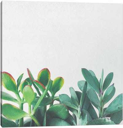 Crassula Group Canvas Art Print
