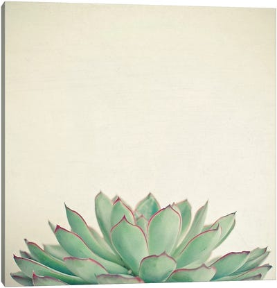 Echeveria Canvas Art Print