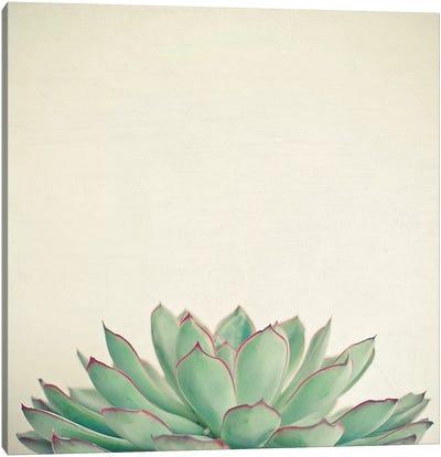Echeveria Canvas Art Print