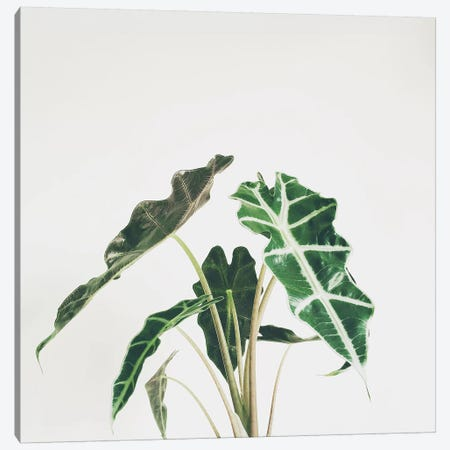 Elephant Ear Canvas Print #CSB45} by Cassia Beck Canvas Print