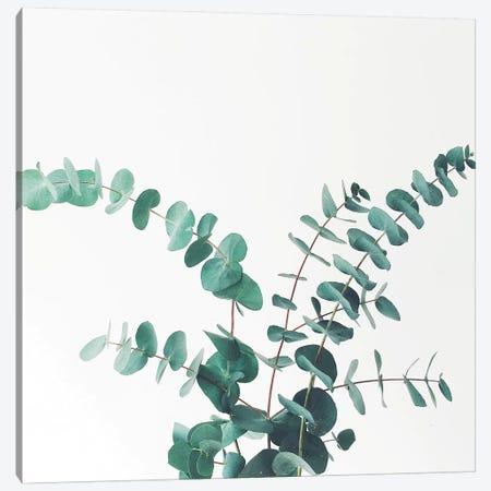 Eucalyptus II 3-Piece Canvas #CSB49} by Cassia Beck Canvas Wall Art