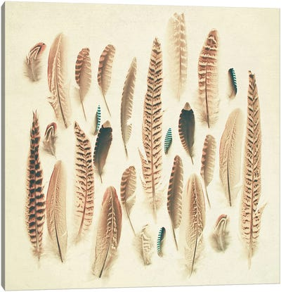 Found Feathers Canvas Art Print