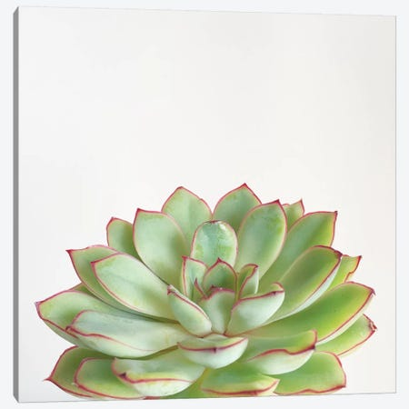Green Succulent Canvas Print #CSB59} by Cassia Beck Canvas Print