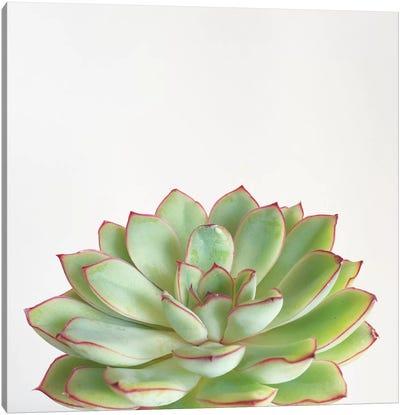Green Succulent Canvas Art Print