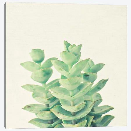 Necklace Vine Canvas Print #CSB77} by Cassia Beck Canvas Artwork