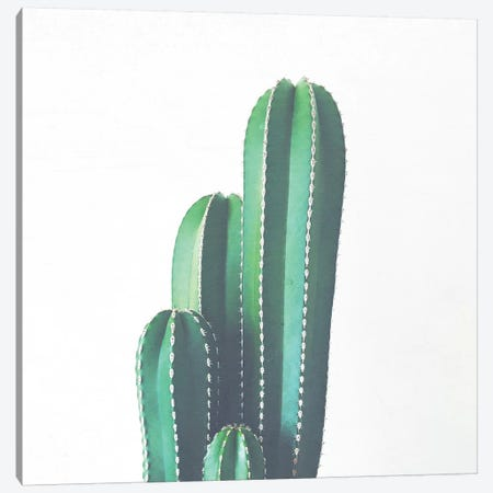 Organ Pipe Cactus Canvas Print #CSB83} by Cassia Beck Canvas Artwork