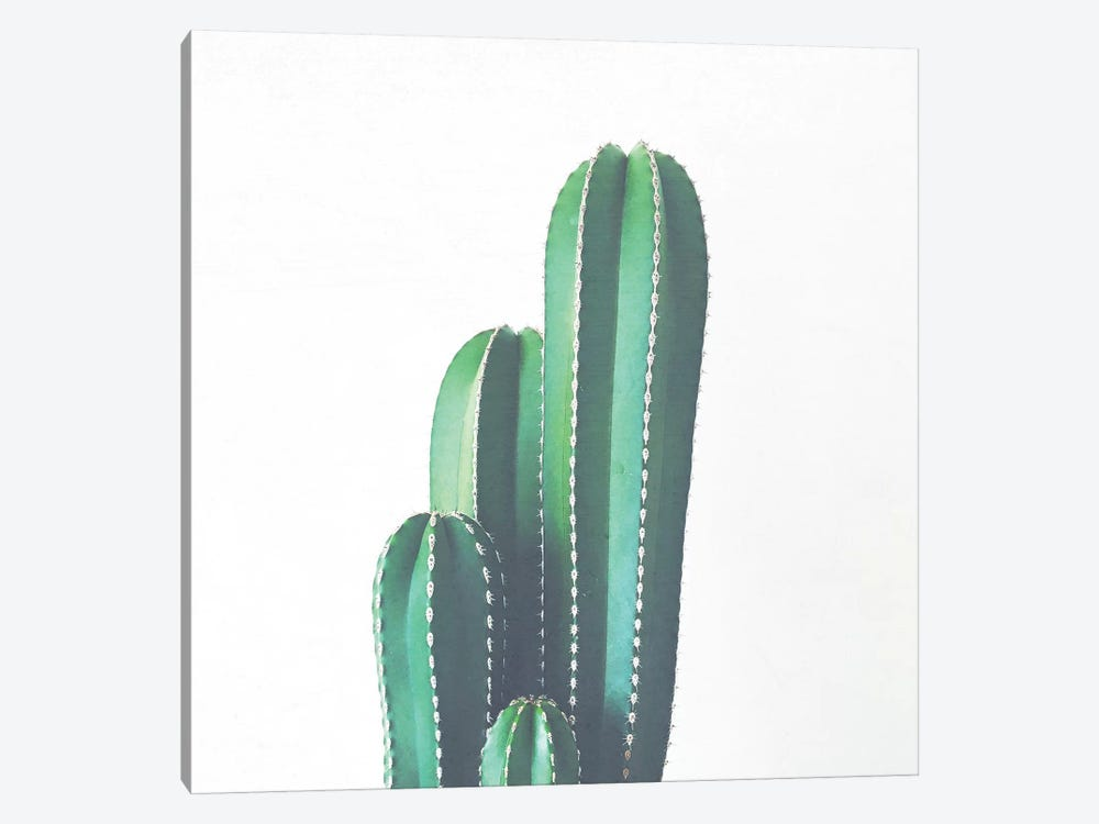 Organ Pipe Cactus by Cassia Beck 1-piece Canvas Art Print
