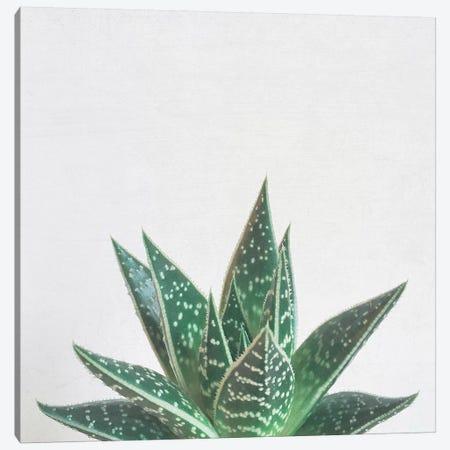 Aloe Tiki Canvas Print #CSB8} by Cassia Beck Canvas Wall Art