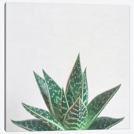 Aloe Tiki Canvas Print #CSB8} by Cassia Beck Canvas Wall Art