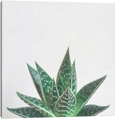 Aloe Tiki Canvas Art Print