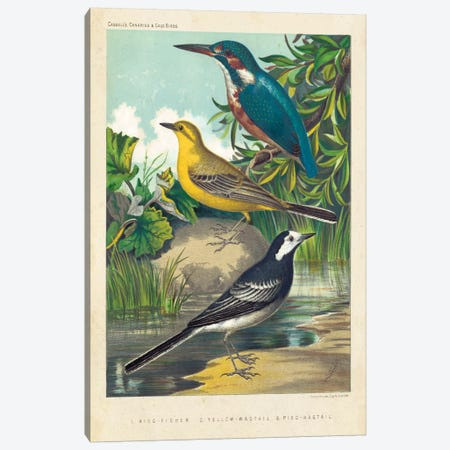 King-Fisher & Wagtails Canvas Print #CSL1} by Cassell Canvas Artwork