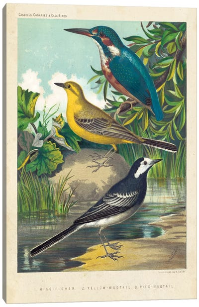 King-Fisher & Wagtails Canvas Art Print