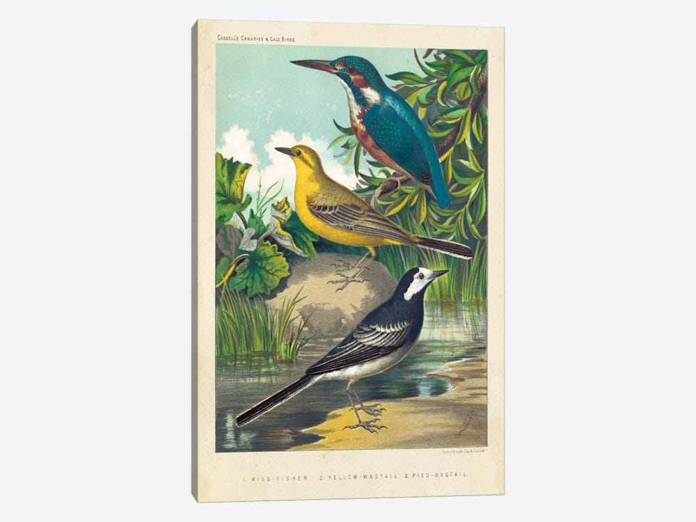 King-Fisher & Wagtails by Cassell 1-piece Canvas Art Print