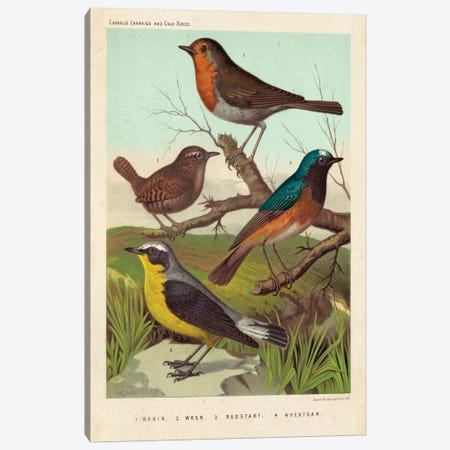 Robin, Wren & Redstart Canvas Print #CSL2} by Cassell Canvas Art