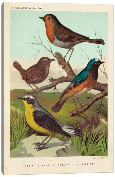 Robin, Wren & Redstart Canvas Art Print