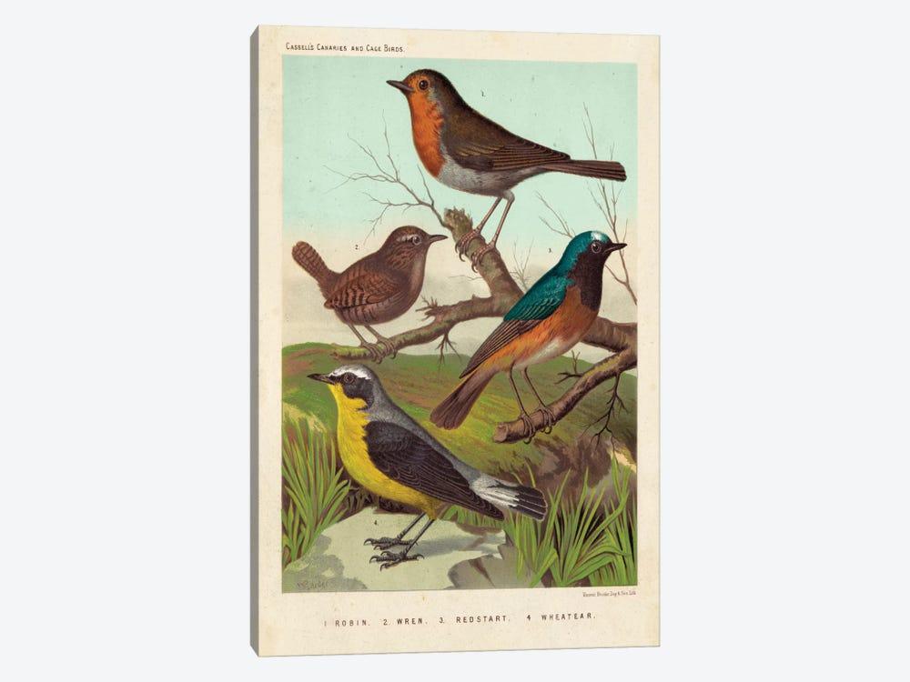 Robin, Wren & Redstart by Cassell 1-piece Canvas Wall Art