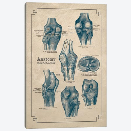 Anatomy Of The Knee Joint Canvas Print #CSM10} by ChartSmartDecor Canvas Artwork