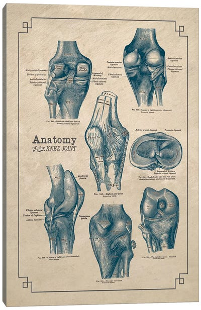 Anatomy Of The Knee Joint Canvas Art Print