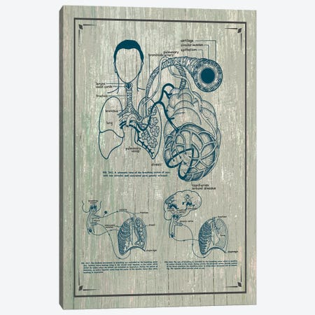 Anatomy Of The Lungs Canvas Print #CSM11} by ChartSmartDecor Canvas Art