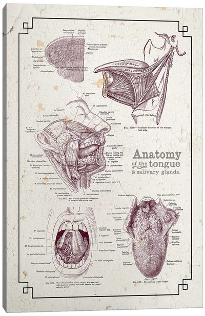 Anatomy Of The Mouth And Tongue Canvas Art Print