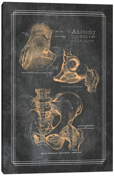 Anatomy Of The Pelvis And Hip Joint Canvas Art Print