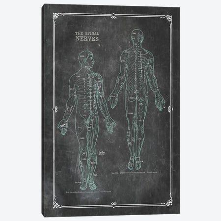 Anatomy Of The Spinal Nerves Canvas Print #CSM15} by ChartSmartDecor Art Print