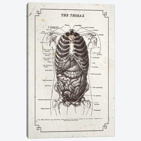 Anatomy Of The Thorax Canvas Print #CSM16} by ChartSmartDecor Canvas Print