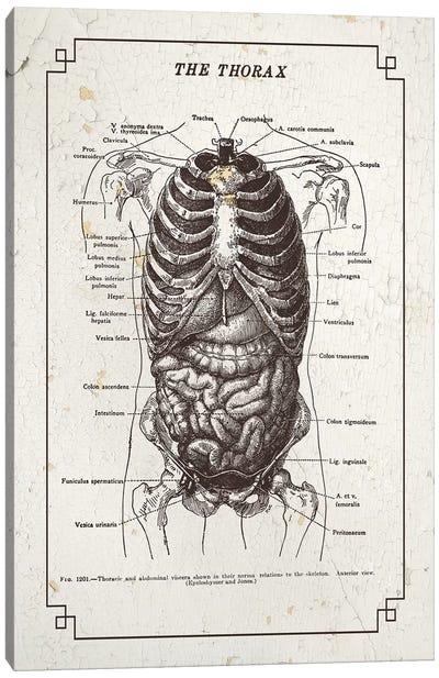 Anatomy Of The Thorax Canvas Art Print