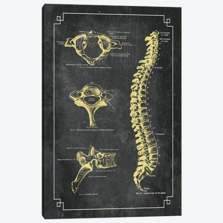Bones Of The Spine Canvas Print #CSM18} by ChartSmartDecor Canvas Wall Art