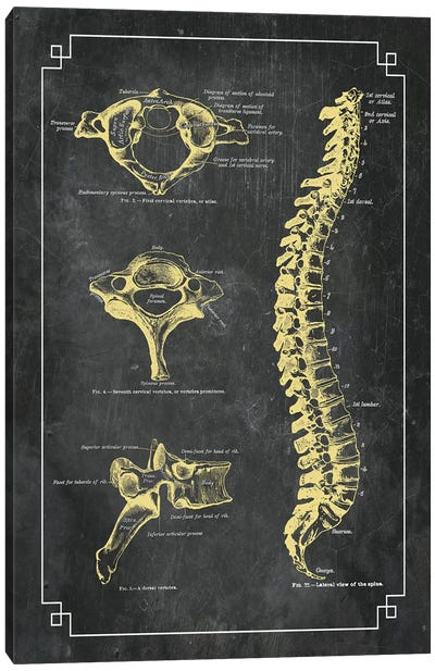 Bones Of The Spine Canvas Art Print