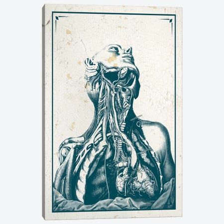 Dissection Of The Chest And Neck Canvas Print #CSM19} by ChartSmartDecor Canvas Artwork