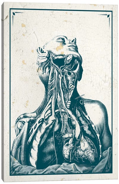 Dissection Of The Chest And Neck Canvas Art Print