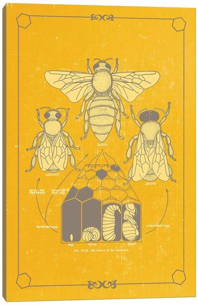 Anato-Bee Canvas Art Print