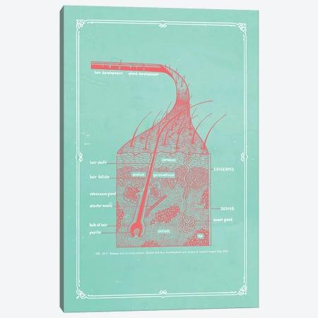 Layers Of The Skin Canvas Print #CSM23} by ChartSmartDecor Canvas Art Print